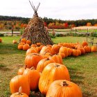Pumpkins, Gilford NH. Photograph by Jeffrey Newcomer.